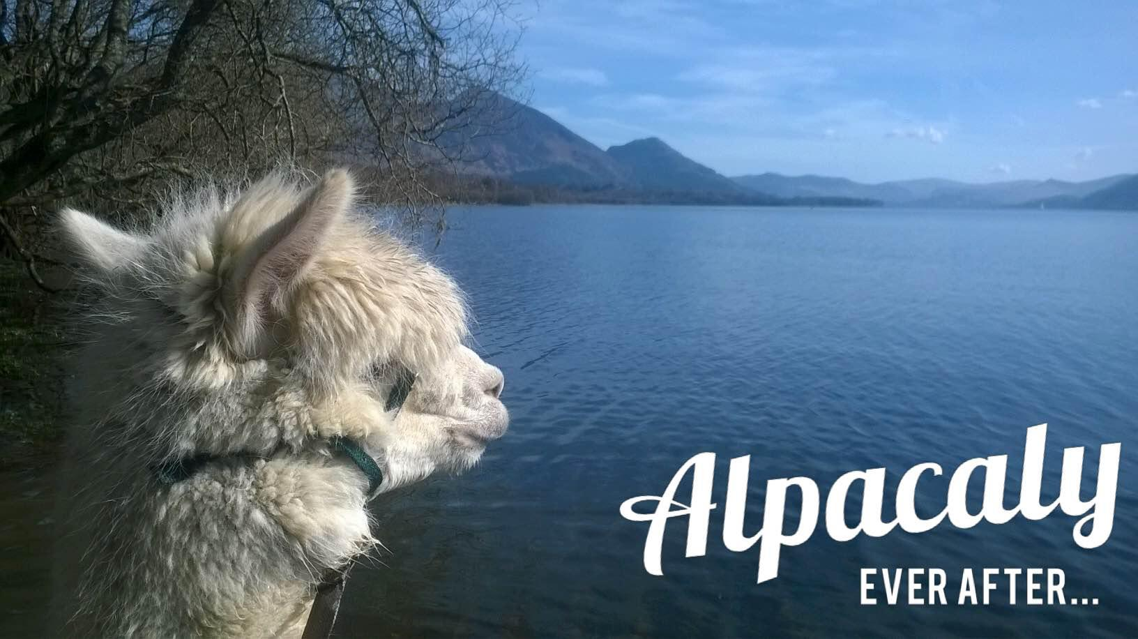 Alpacaly Ever After Logo